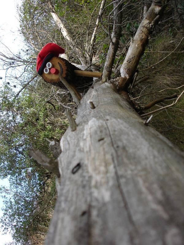Baixant pel tronc d'un arbre
