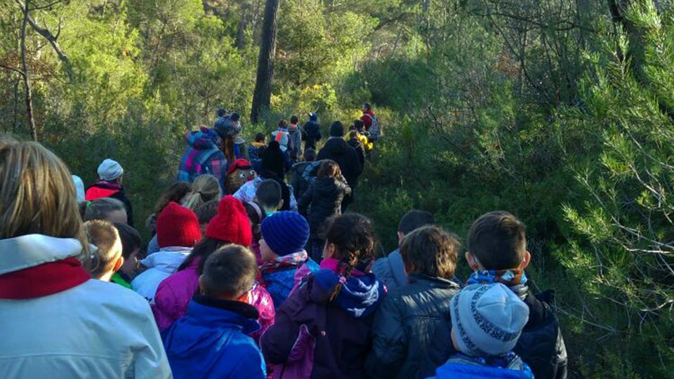 Sortida als boscos de Clariana per veure els primers tions - Clariana