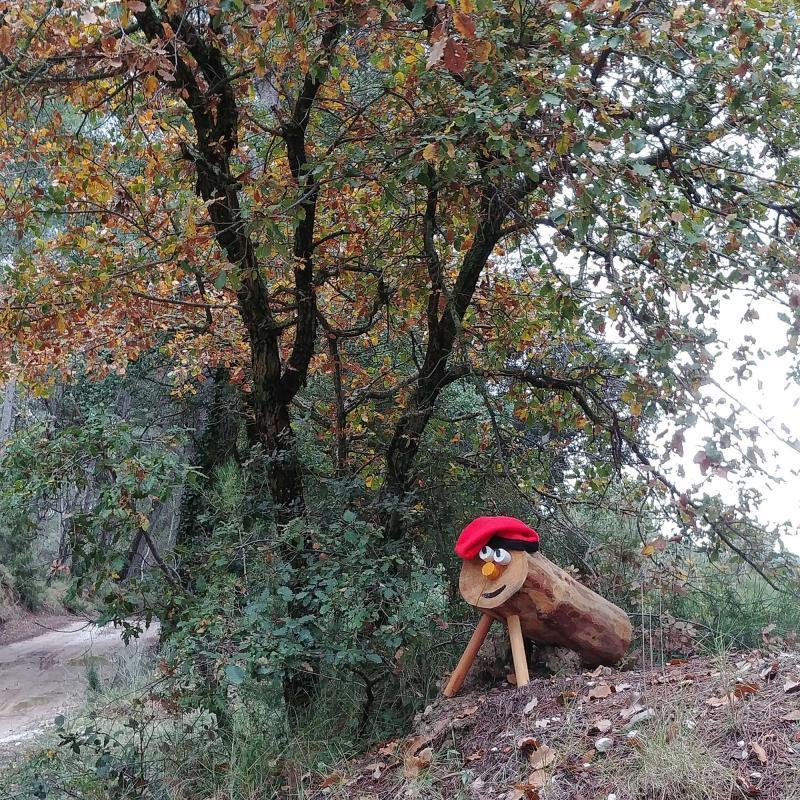 Pels boscos i camps